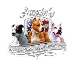 american pit bull terrier zucht angie s amstaff kennel american staffordshire terrier seit 1987