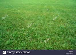 large green grass yard stock photo royalty free image 1331027