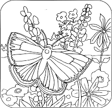 clipart coloring book butterfly