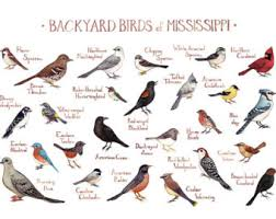 California Backyard Birds california backyard birds field guide art print watercolor