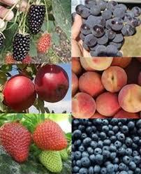 What Fruit Trees Grow In Texas - arkansas fruits u0026 nuts berries fruit trees grapes pecans