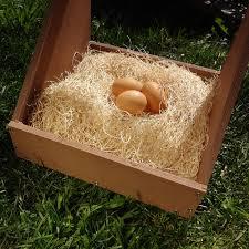precision pet excelsior nesting pads walmart com
