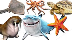 sea creatures for kids and children learn sea animals names for