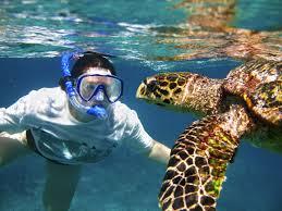 California snorkeling images Snorkeling california tour blog jpg