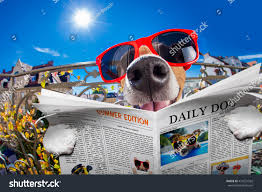 silly dumb crazy jack russell dog stock photo 474231562 shutterstock
