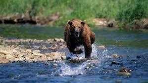 running bear meme generator