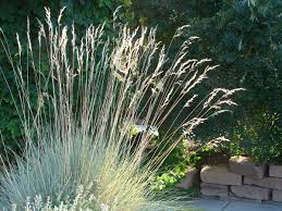 the guide to taking care of ornamental grass