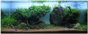 Planted Aquarium Aquascaping Aquascape Of The Month August 2009