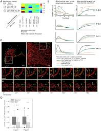 dynamic modelling of pathways to cellular senescence reveals