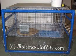 Rabbit Hutches For Indoors Indoor Rabbit Cage How To Set Up Your Indoor Rabbit Hutch And Cage