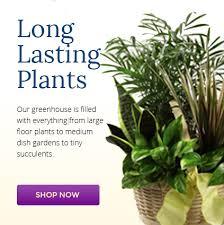 Send Flowers San Antonio - san antonio flower delivery send flowers u0026 gifts kremp florist