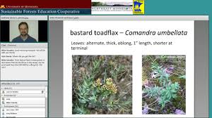 native plant guide mn forest understory plants id for native plant communities youtube