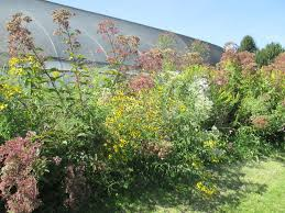 what is a non native plant edge of the woods native plant nursery specializing in plants