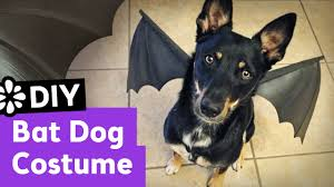 diy bat dog halloween costume sea lemon youtube