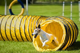 Dog Backyard Playground by Dog Playground Ideas Cuteness