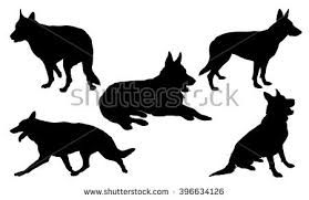 belgian shepherd silhouette german shepherd stock images royalty free images u0026 vectors