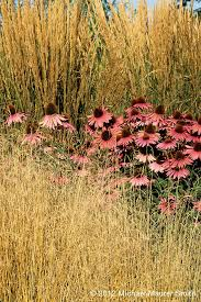 353 best grasses images on plants gardening and