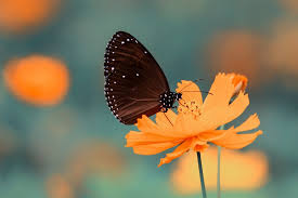 butterfly 15 best free butterfly insect wing and flower