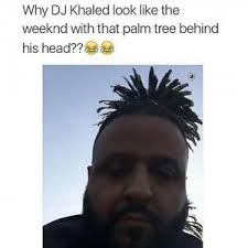 The Weeknd Hair Meme - why dj khaled look like the weeknd with that palm tree behind his head