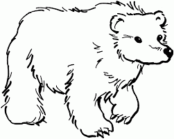 printable polar bear coloring pages kids draw brilliant