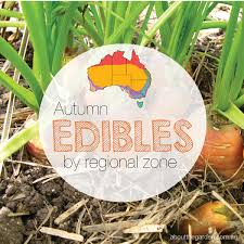 vegetable garden seasonal growing guide australia about the