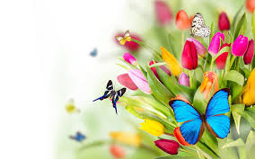 flowers and butterflies spring wallpapers hd wallpapers pop