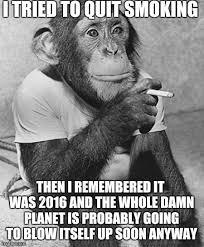 Chimp Meme - smoking chimp memes memes pics 2018