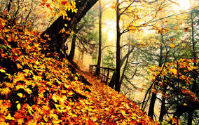 forests forest woods pathway trees autumn wallpapers high