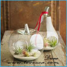 hanging pear shaped glass bottle terrarium for sale buy hanging