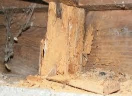 Powder Post Beetles In Hardwood Floors - termite types lomax termite control