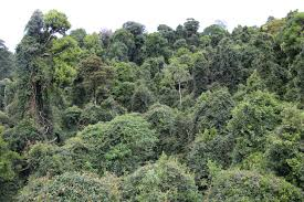 climbing plants disturb carbon storage in tropical forests