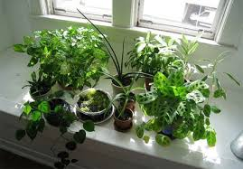 plants at home home dzine lifestyle benefits of house plants
