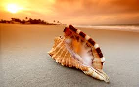 Shell Wallpaper | 145 shell hd wallpapers background images wallpaper abyss