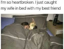 Dog In Bed Meme - wife caught in bed with best friend dog