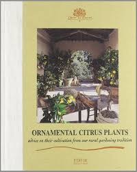 ornamental citrus plants advice on their cultivation from our