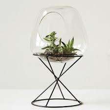 terrariums you u0027ll love wayfair