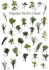 native american healing herbs plants identifying herbs powers of natural herbs health and fitness