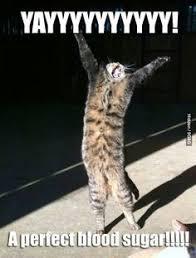 Success Cat Meme - a veces se gana siempre se aprende buen y feliz viernes you