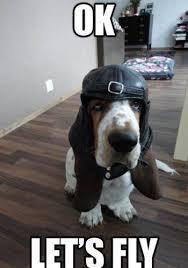 Fly Meme - 12 best basset hound memes of all time