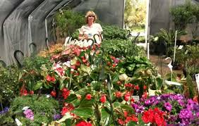 Nursery Plant Supplies by Wholesale And Retail Nursery And Landscape And Irrigation Services