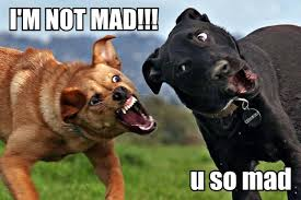 U Mad Meme - u mad dawg imgur