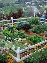 vegetable garden design home decor ideas