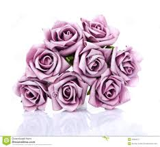 purple roses bouquet of purple roses on a white background stock photo image
