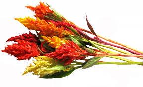 edible flowers for sale edible flowers firestix sparklers microflower blend freshorigins
