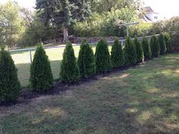 best privacy fence trees fence and fencing