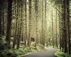 landscape photography forest print oregon landscape print