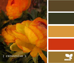 ranunculus brights ranunculus tuscan kitchen colors and kitchen