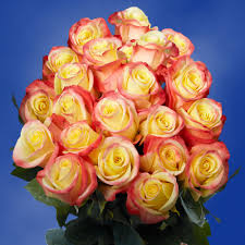 yellow roses with tips yellow roses with pink tips meaning more information kopihijau