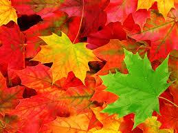 pemandangan autumn leaves wallpaper fall pinterest