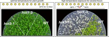 High Heat Plants Some Like It Protecting Plants From Heat Stress